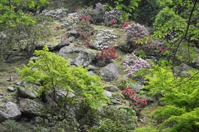 Rhododendron festival at waterfall of Urami