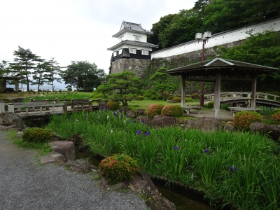 【開花情報】大村公園の花菖蒲は現在「咲き終え」です